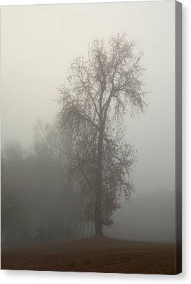 Standing Tall Canvas Print by Skip Willits