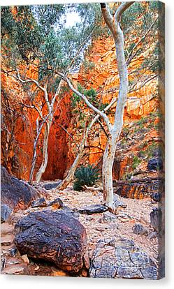 Stanley Chasm Canvas Print by Bill  Robinson