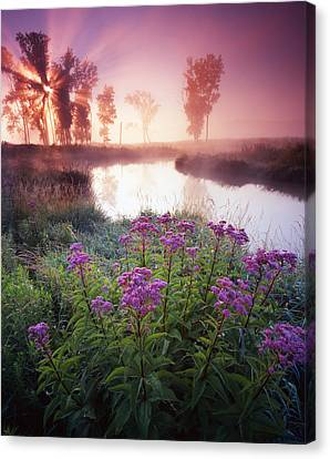 Star In The Fog Canvas Print by Ray Mathis