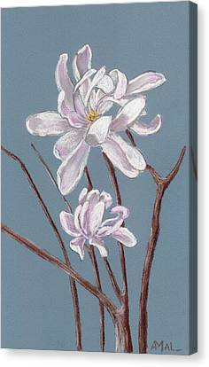 Star Magnolia  Canvas Print by Anastasiya Malakhova