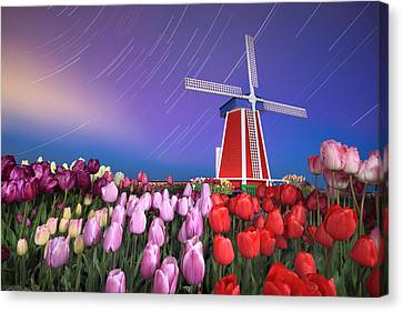 Star Trails Windmill And Tulips Canvas Print by William Lee