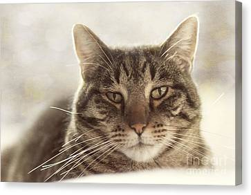 Stare Into My Eyes Canvas Print by Juli Scalzi