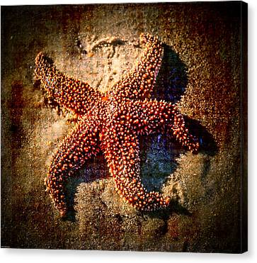 Starfish 2 Canvas Print by Kathleen Scanlan
