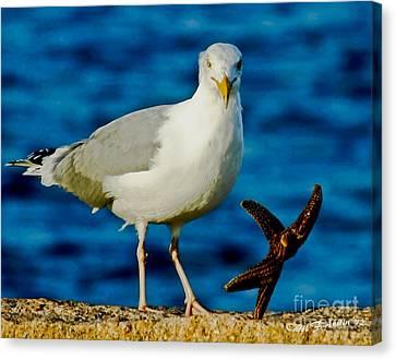 Starfish And Seagull Dance On The Rocks Canvas Print by Carol F Austin