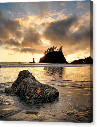 Starfish Canvas Print by Leland D Howard