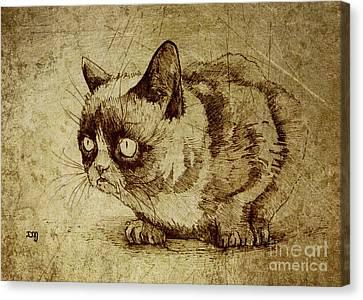 Staring Cat Canvas Print by Daniel Yakubovich