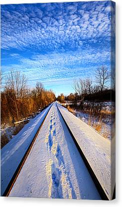 Staying Within The Lines Canvas Print by Phil Koch