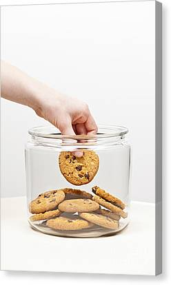 Stealing Cookies From The Cookie Jar Canvas Print by Elena Elisseeva