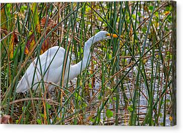 Stealthy Egret Canvas Print by John M Bailey