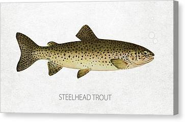 Steelhead Trout Canvas Print by Aged Pixel