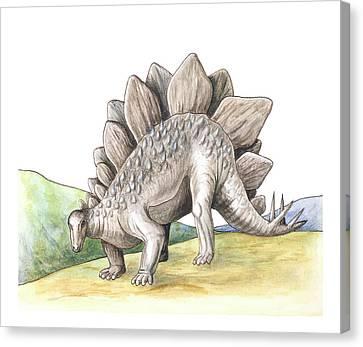Stegosaurus Canvas Print by Deagostini/uig