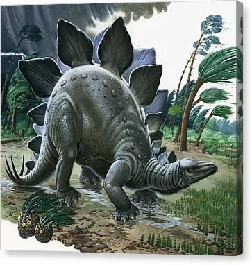 Stegosaurus Canvas Print by English School
