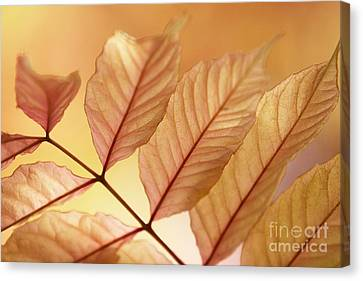 Stems Canvas Print by Andrew Brooks