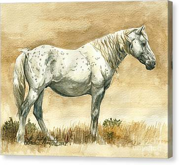 Sterling Wild Stallion Of Sand Wash Basin Canvas Print by Linda L Martin