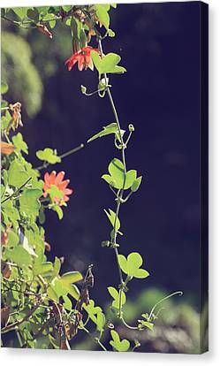 Still Holding On Canvas Print by Laurie Search