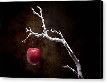 Still Life Apple Tree Canvas Print by Tom Mc Nemar