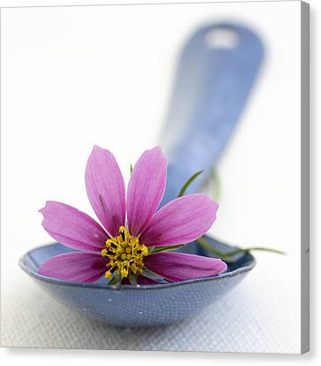 Still Life With Pink Flower On A Blue Spoon Canvas Print by Frank Tschakert