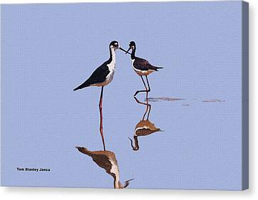 Stilts In The Blue Canvas Print by Tom Janca