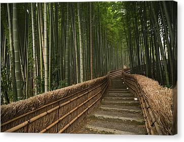 Stone Pathway In Bamboo Forest Canvas Print by Philippe Widling