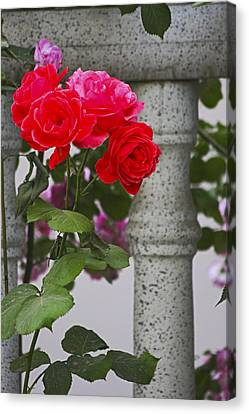 Stop And Smell The Roses Canvas Print by Yun Qing Fu