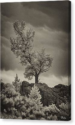Storm And Tree Canvas Print by Christine Hauber