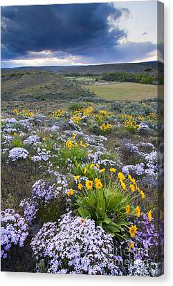Storm Over Wildflowers Canvas Print by Mike  Dawson