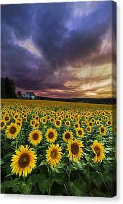 Stormy Sunrise Canvas Print by Debra and Dave Vanderlaan