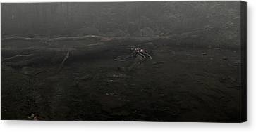 Stranded Canvas Print by Chase Poore