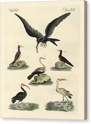 Strange Marsh-birds And Waterbirds Canvas Print by Splendid Art Prints