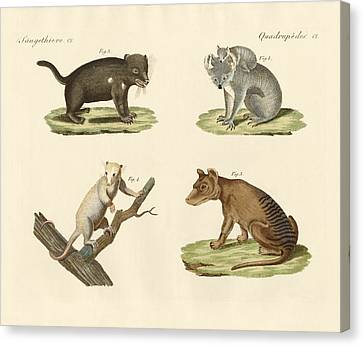 Strange Marsupials Canvas Print by Splendid Art Prints