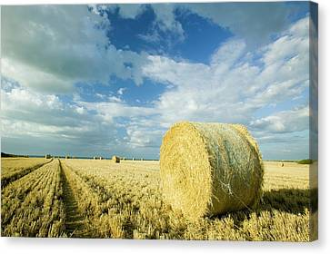 Straw Bales In A Field Canvas Print by Ashley Cooper
