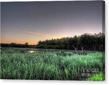 Streaky Swamp Sunrise Canvas Print by Deborah Smolinske