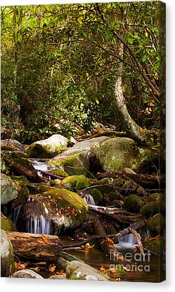 Stream At Roaring Fork Canvas Print by Lena Auxier