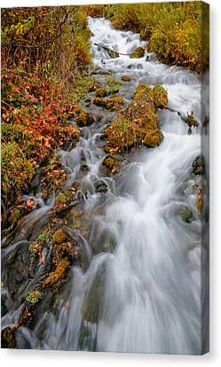 Stream In Autumn Canvas Print by Utah Images