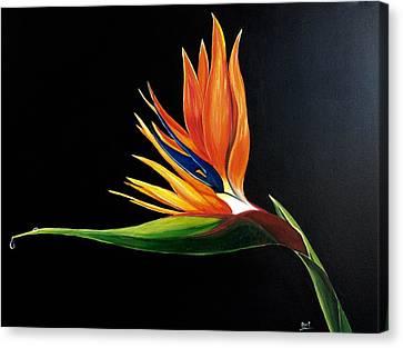 Strelitzia - Bird Of Paradise . Canvas Print by Aarti Bartake