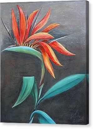 Strelitzia Canvas Print by Gertrude Scheffler