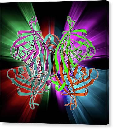 Streptavidin Bacterial Protein Canvas Print by Laguna Design