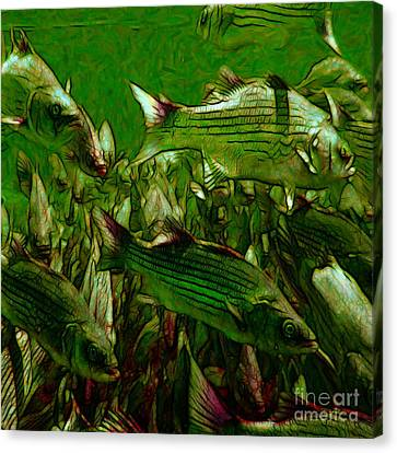Striped Bass - Painterly V2 - Square Canvas Print by Wingsdomain Art and Photography