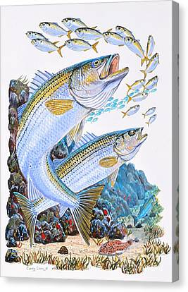 Striped Bass Rocks Canvas Print by Carey Chen