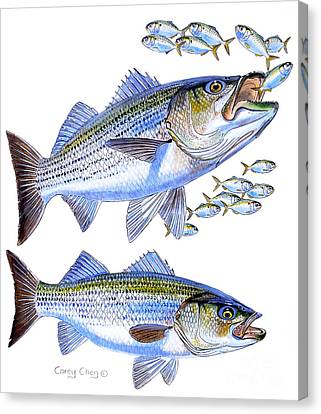 Stripers Canvas Print by Carey Chen