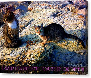 Strong-willed Cat Canvas Print by Hanza Turgul
