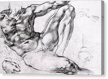 Study For The Creation Of Adam Canvas Print by Michelangelo