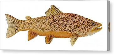 Study Of A Tiger Trout Canvas Print by Thom Glace