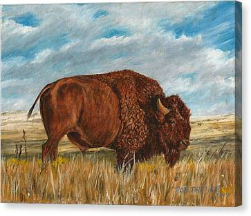 Study Of An American Bison Canvas Print by Rob Dreyer AFC