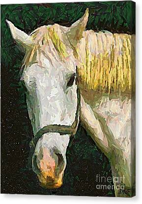 Study Of The Horse's Head Canvas Print by Dragica  Micki Fortuna