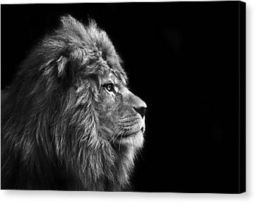 Stunning Facial Portrait Of Male Lion On Black Background In Bla Canvas Print by Matthew Gibson