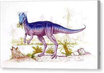 Stygimoloch Dinosaur Canvas Print by Deagostini/uig