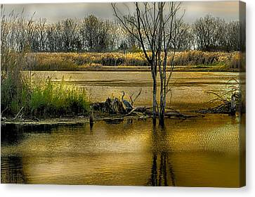 Sublime Banner Part 3 Canvas Print by Kimberleigh Ladd