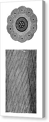 Submarine Telegraph Cable Canvas Print by Science Photo Library