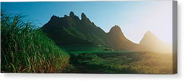 Sugar Cane Crop In A Field, Trois Canvas Print by Panoramic Images